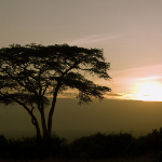 Africa's Expat Destinations